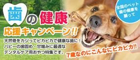 歯の健康応援キャンペーン