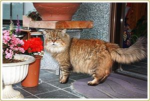第1回 長寿コンテスト グランプリ 寛太(22歳)猫