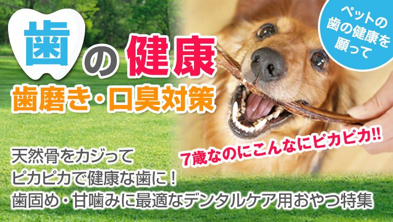 犬の歯磨き・口臭予防・歯固め・デンタルケアにおすすめ特集