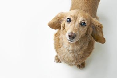 愛犬とのスキンシップを心がけましょう。