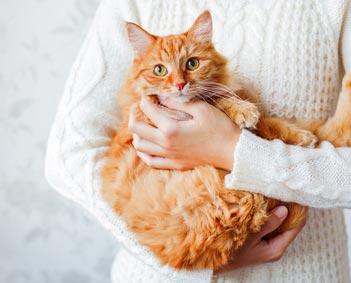 猫の体の状態をチェック