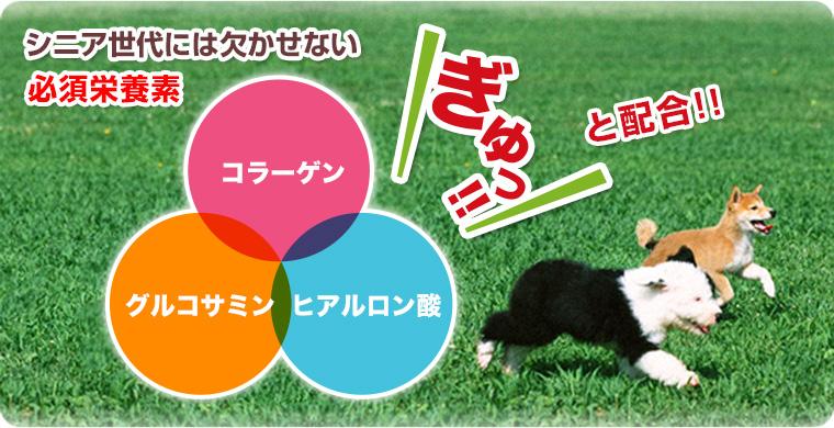 長寿一番は老犬に欠かせないヒアルロン酸・グルコサミン・コラーゲン配合!